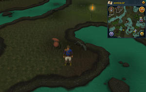 Scan clue Haunted Woods south-east of Canifis bank