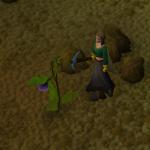 Strange plant2