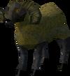 Golden sheep sheared