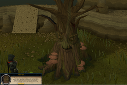 Healing the Spirit Tree