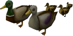 Mega ducklings pet