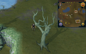 Compass clue Lumbridge east of water altar