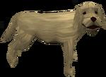 Stray Labrador
