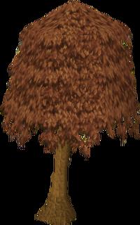 Maple tree1