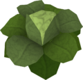 Cabbage (Draynor Manor) detail.png