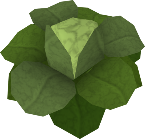 File:Cabbage (Draynor Manor) detail.png
