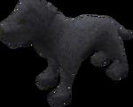Labrador puppy (black) pet
