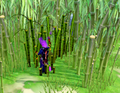 Clearing the bamboo.png