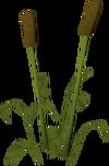 Reeds built