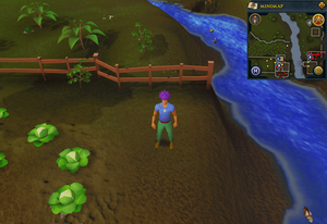 Compass clue Lumbridge north of Farmer Fred's farm