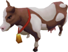 Prized dairy cow
