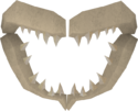 Shark jawbone detail