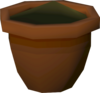 Yew seedling detail