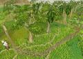 Hardwood grove.png