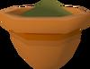 Papaya seedling (w) detail