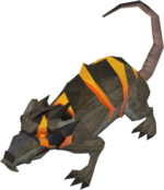 Rat Warped