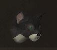 Pet kitten profil