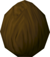 Tropical coconut detail