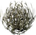 Tumbleweed pet.png