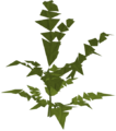 Fern (big plant) built.png