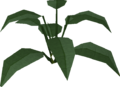 Large leaf bush built.png