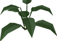 Large leaf bush built