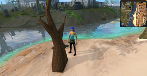Sandy Clue Scroll Grappling Tree Al Kharid