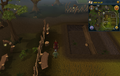 Cryptic clue Tree Gnome Stronghold gnome trainer.png