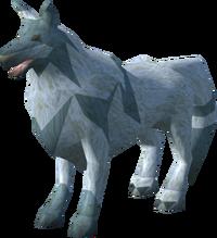 Spirit wolf (Familiarisation)