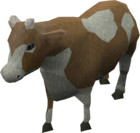 Cow old2