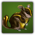 Golden Chinchompa Solomon icon.png