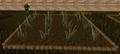 Reeds2.png