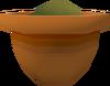 Calquat seedling (w) detail