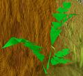 Jungle Bush.png