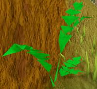 Jungle Bush