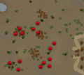 Do No Evil crates map.png