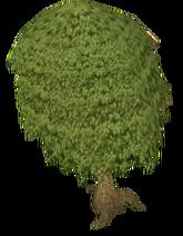 Mahoganytree hd