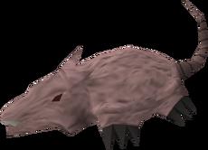 Brine rat
