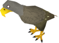 Karamjan Jungle eagle.png