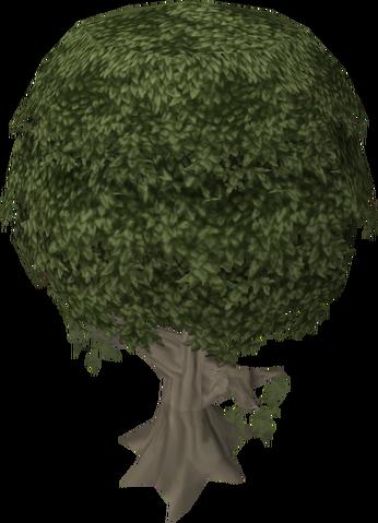 File:Mastic tree.png