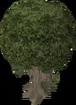 Mastic tree.png