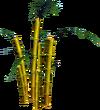 Golden Bamboo (tree)