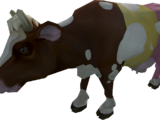 Harlequin cow
