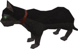 Overgrown cat (black) pet