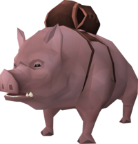 Pig (pet) beast of burden