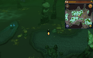 Scan clue Lumbridge Swamp Caves east of Lumbridge Swamp entrance