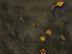 Compass clue Wilderness east of Chaos Temple