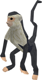 Monkey (black and white) pet
