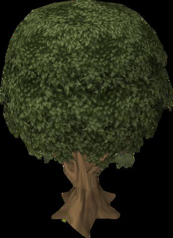 File:Sassafras tree.png