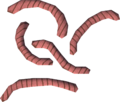 Worms detail.png